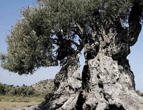 Walking at Eleonas of Aegina
