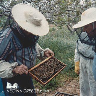 Honey on Aegina