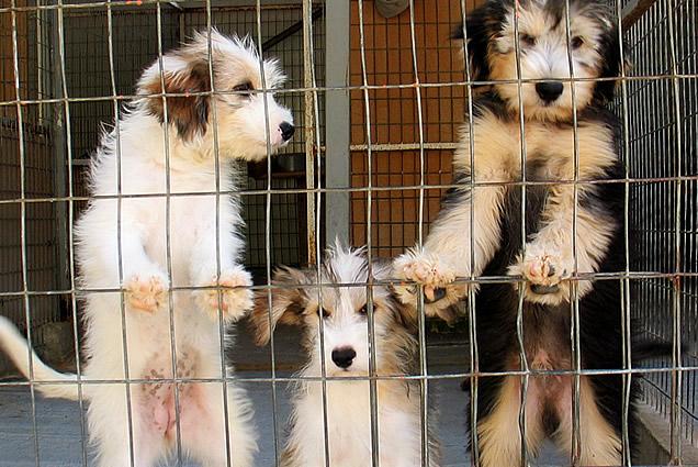 animal welfare articles